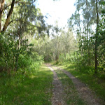 Track in Green Point Reserve (389666)