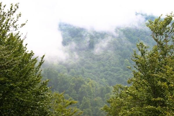 جنگل و ابر