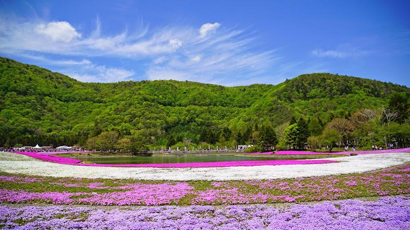 富士芝桜まつり 写真13