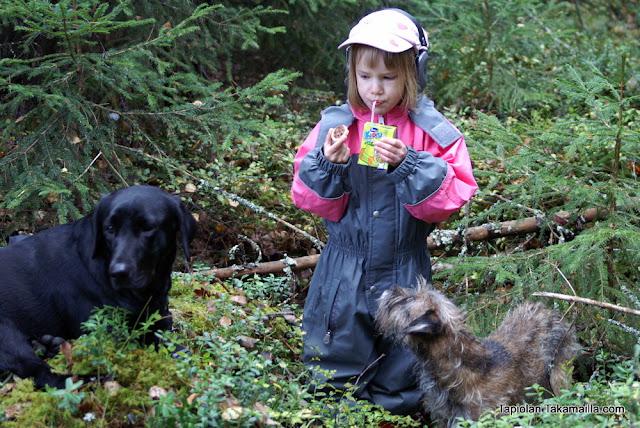 Labradorinnoutaja eväshetki luontoretki bordeterrieri