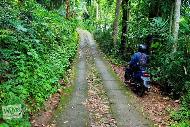 Jalan desa menuju obyek wisata Kedung Gulo di Desa Kalitapas, Kecamatan Bener, Kabupaten Purworejo, Jawa Tengah