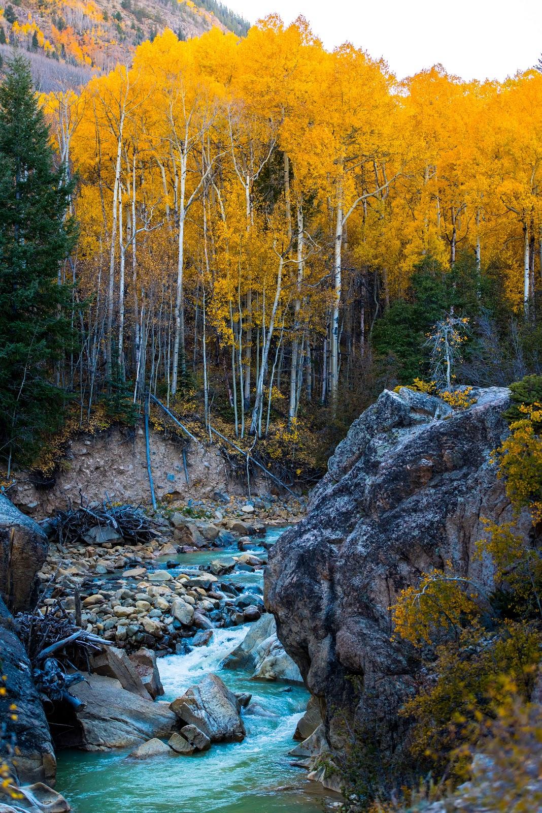 Jakie Kolory nosić jesienią? Żółte liście na górskich brzozach nad strumieniem