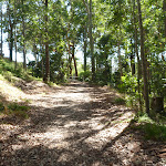 Trail through forest with houses nearby in blackbutt Reserve (400423)