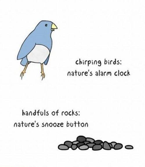 cartoon of a singing bird as nature's alarm clock;rocks as snooze alarm