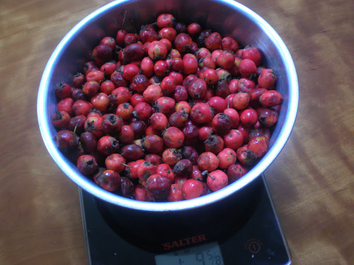 Some of the haws. I discarded the ones that had gone brown and shrivelled.