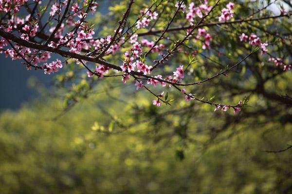 Chùm thơ tung hoành trục khoán viết về Mùa Xuân thật hay