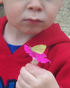 child observes a butterfly on a flower.