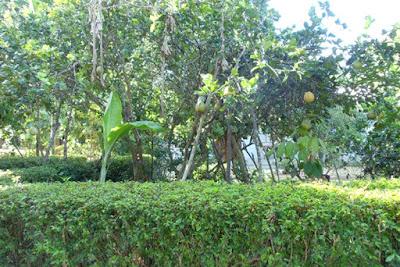 Làng hoa trái Đại Bường, Quế Sơn