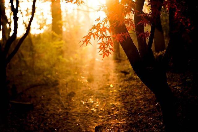 nắng mùa Thu xuyên qua kẽ lá