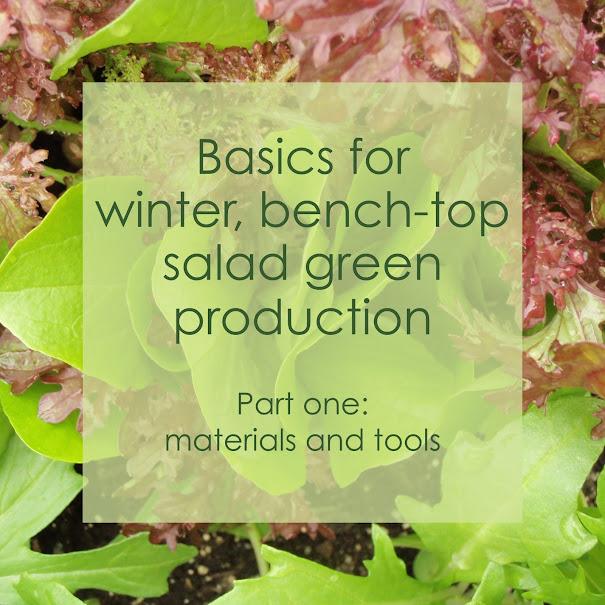 Basics for salad greens pt1