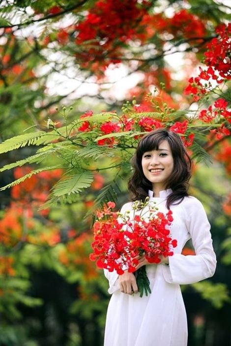 ảnh nữ sinh và hoa phượng vĩ