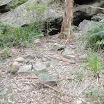 Small campsite just upstream of Jack Evans crossing (144573)