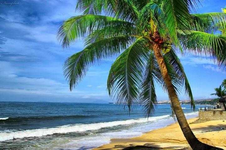 bóng dừa xanh bên bờ biển