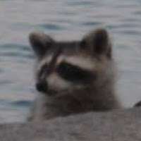 Maria Meep's avatar