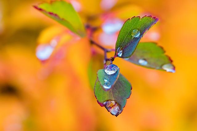 ảnh giọt mưa mùa thu còn đọng trên lá