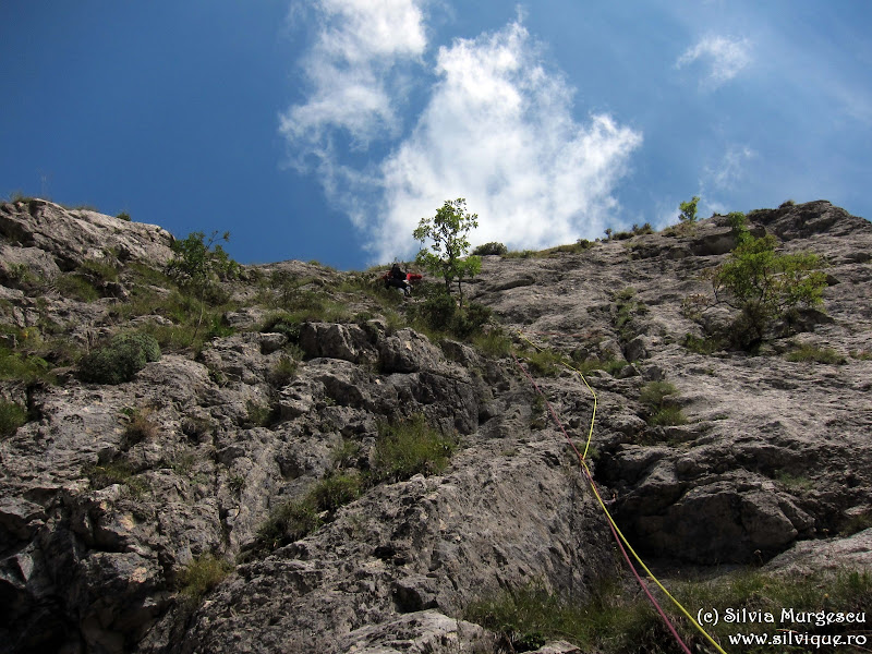 2014.08.31 - Buila - Brandusa de Toamna 5A, 5lc