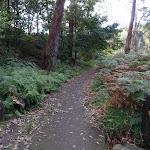 Track along Lane Cove River (54929)
