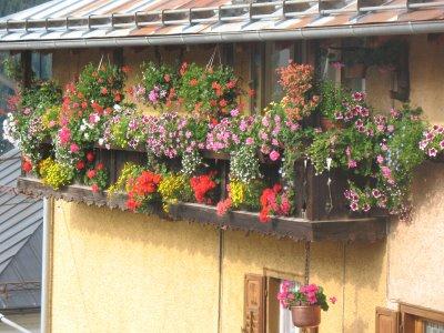 Piante e Fiori: Fiori e piante per il balcone... Il balcone in ombra ...