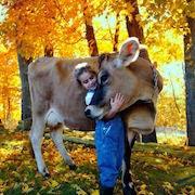 Сон корова