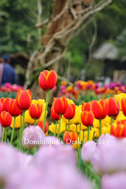 A see of tulips