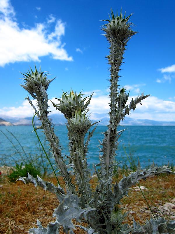 Spiky plants
