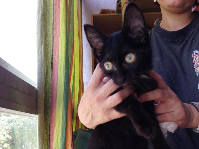 Yoko, la gata rescatada de la alcantarilla IMG_3914