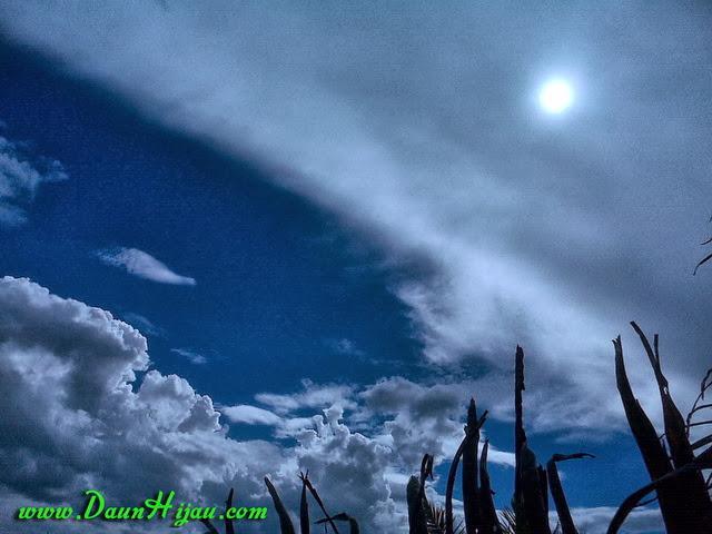 Daun hijau menggapai awan putih dan langit biru