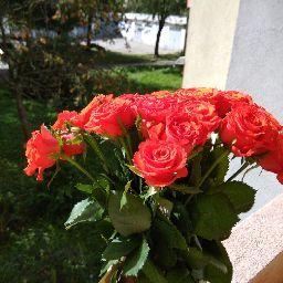 Марія Подзвінна