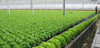 Đơn hàng nông nghiệp cần 6 nữ thực tập sinh làm việc tại Tochigi Nhật Bản tháng 04/2016