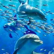 К чему снится плавать с дельфинами?