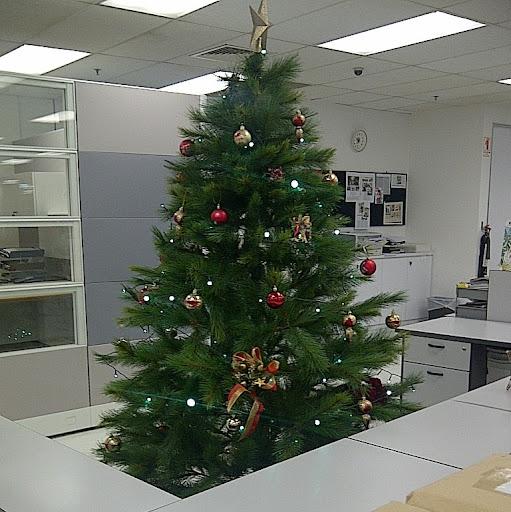 Christmas Tree Photo 10