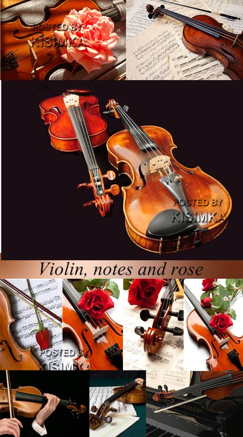 Stock Photo: Violin, notes and rose