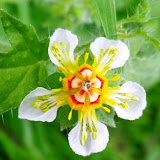Macros - Flora