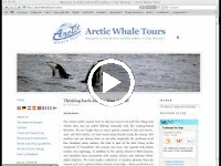 Arctic Whale Tours website