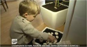 100%mag-M6-reportage-avec-cubes-et-petits-pois-champignons-a-domicile