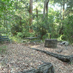 Old picnic area in the Blackbutt Reserve (399541)