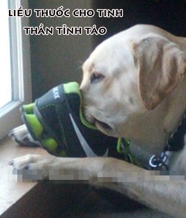 Ảnh vui chú chó đưa mũi vào chiếc giày hôi