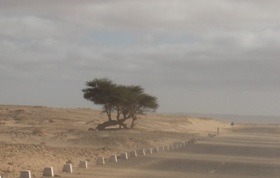 Marrocos e Mauritãnia a Queimar Pneu e Gasolina - Página 9 DSCF1054