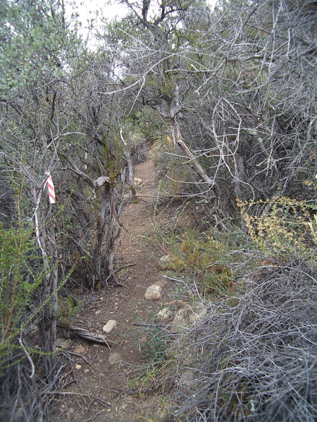 a bit of well used but unsuable trail looking stuff that is not a trail, or even a route
