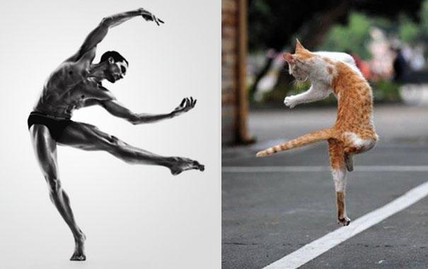 Любимите неща на жените в едно или 25 снимки на горещи мъже и котенца