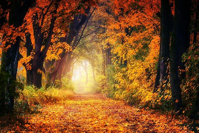 ảnh con đường Mùa Thu đầy lá vàng