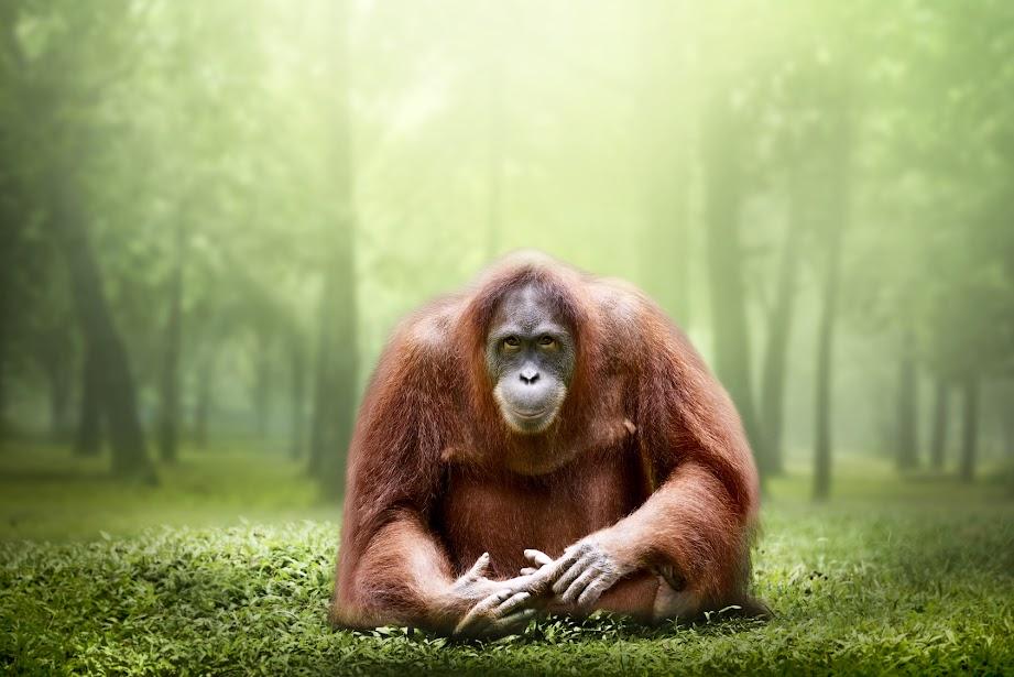 pollution choking wild animals