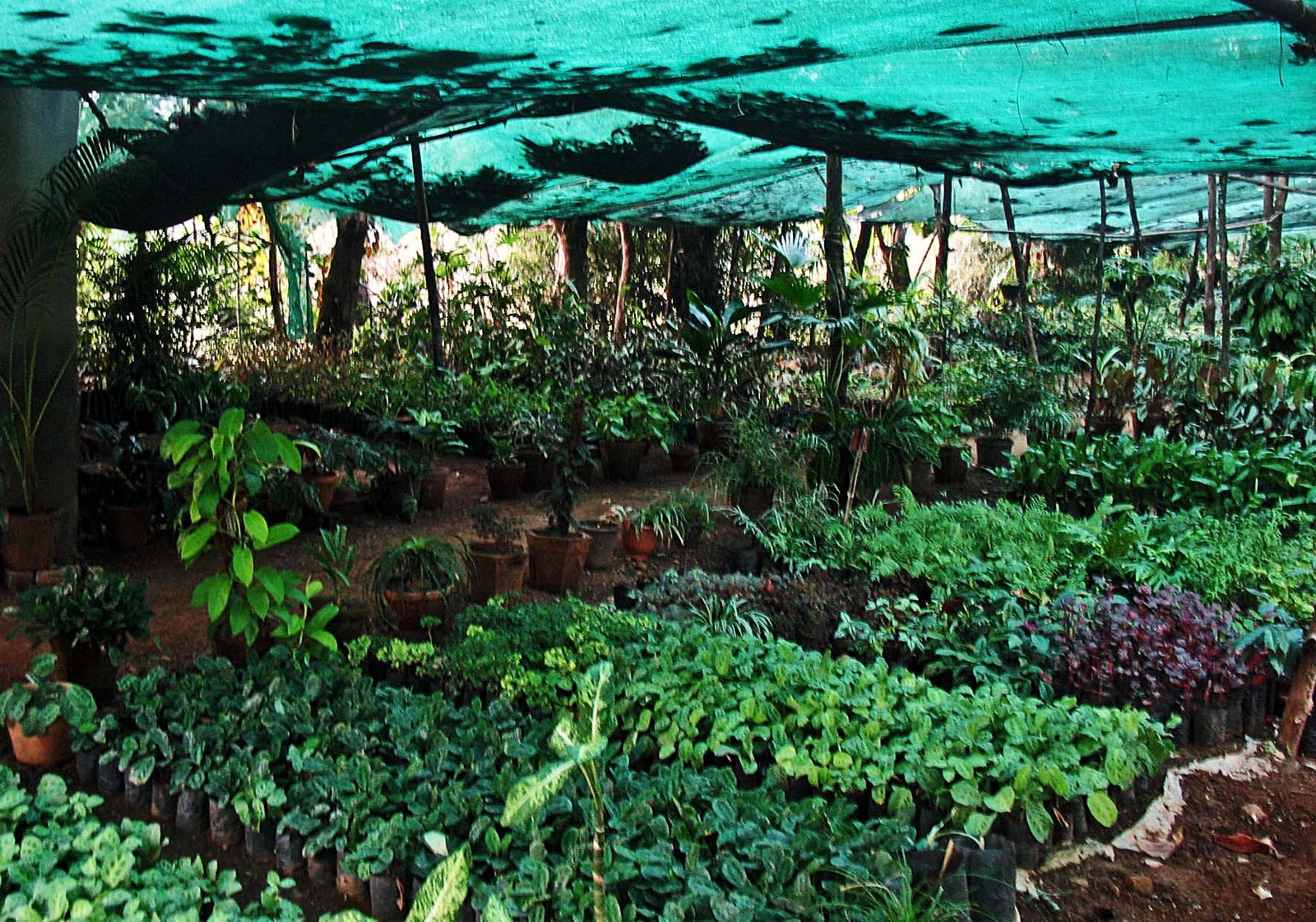 The plastic covering protects the plants from the harsh weather