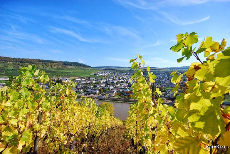 Тут виноградные листья уже пожелтели. Хотя всего в паре метров в соседнем винограднике лозы стоят абсолютно зеленые