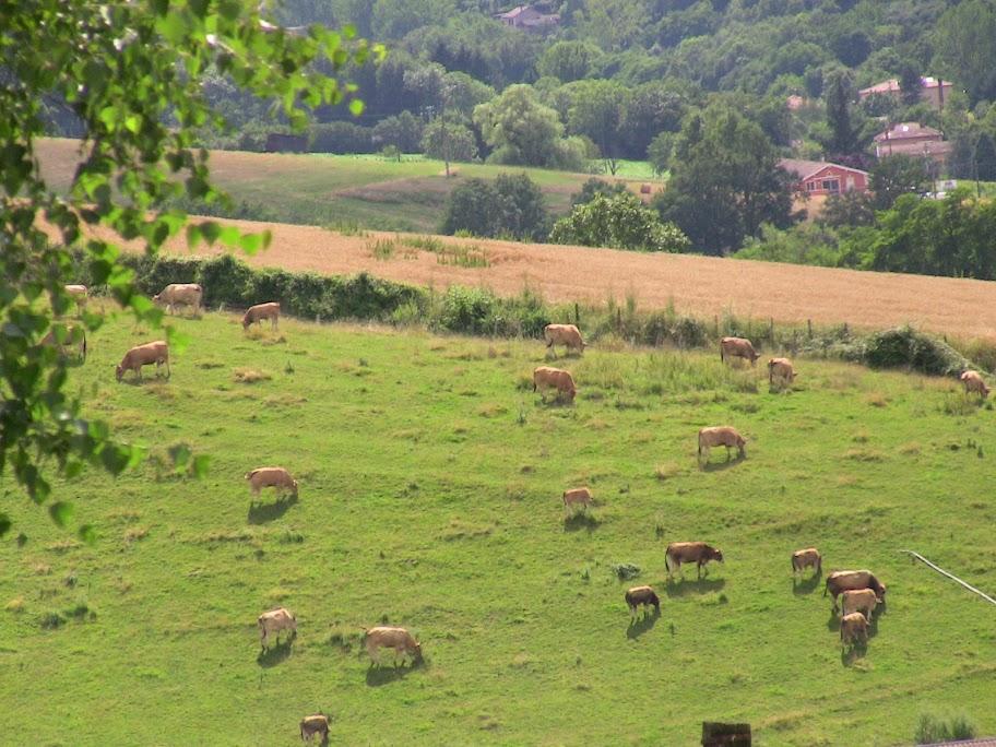 Festival des Fromages de Chèvres IMG_0330