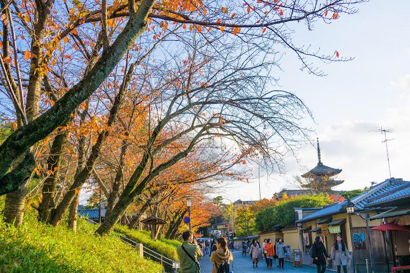 京都 紅葉 ねねの道 写真