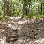 Steep eroded trail on the Wallarah Pennisula (388619)
