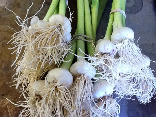Spring garlic — a special treat this time of year #reciperedux
