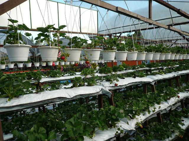 Cara Menata Tanaman dalam Berkebun dengan Optimal