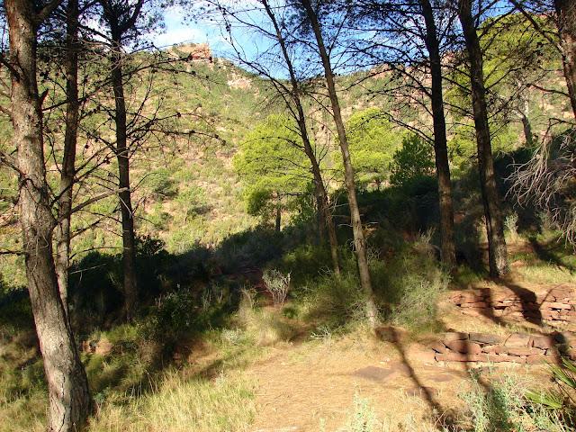 Senderismo - Barranc de l'Agulla - Agullot - Barranc de la Comba
